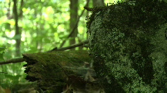 Rocks in forest - stock footage