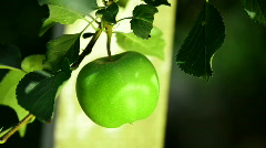 Green Apple. Close Up. Stock Footage