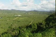 Banana Plantation-pan Stock Footage