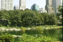 Central Park South Trees Stock Footage