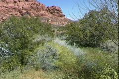 Desert Brush-pans Stock Footage