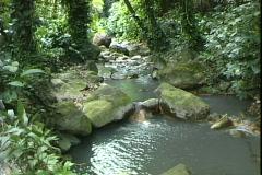 Jungle Mineral Stream Stock Footage