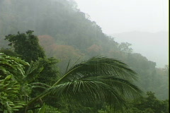 Jungle Rain-pan Stock Footage