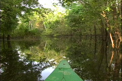 Jungle Stream Boat Bow Stock Footage