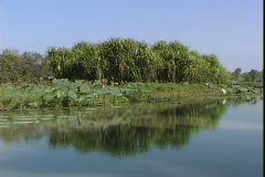 Kakadu Wetlands-pov-3 Stock Footage