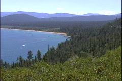 Pine Forest Vista-zoom Stock Footage