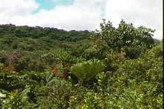 Poas Foliage-pan Stock Footage