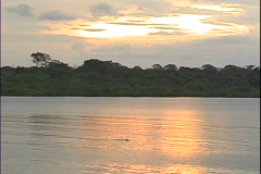 River Sunset & Dolphin-ws - stock footage
