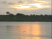 River Sunset & Dolphin-ws Stock Footage