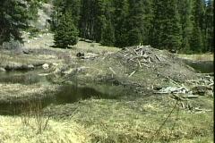 Rockies Park Beaver Dam Stock Footage