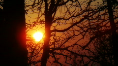 sunset Trees 02 - stock footage