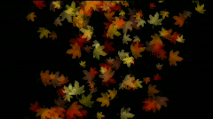 Maple leaf leave falling flare light autumn fall romantic particle artistic. Stock Footage