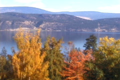Tree Color and Lake-ws Stock Footage