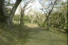 Tree Path Stock Footage