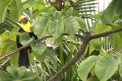 Tucan Eats-HH Stock Footage