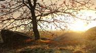 Tree sunset Stock Footage