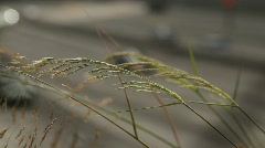 Rush Hour traffic through reed plants Stock Footage