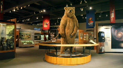 University Alaska Fairbanks museum bear P HD 7891 - stock footage