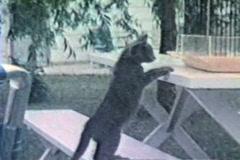 Cat taunts bird Stock Footage