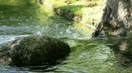 Stock Video Footage of Small creek at the Japanese Garden Hasselt