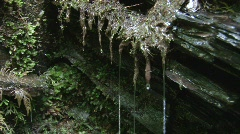 Water dripping from a rock at a spring  - stock footage