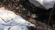 Stock Video Footage of Spring purling stream running through the ravine bottom with melting snow