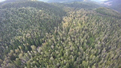 Aerial, flight over mixed forest, #2 Stock Footage