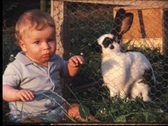 Toddler watching rabbit (vintage 8 mm amateur film) Stock Footage