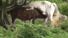 White and brown horse  Stock Footage