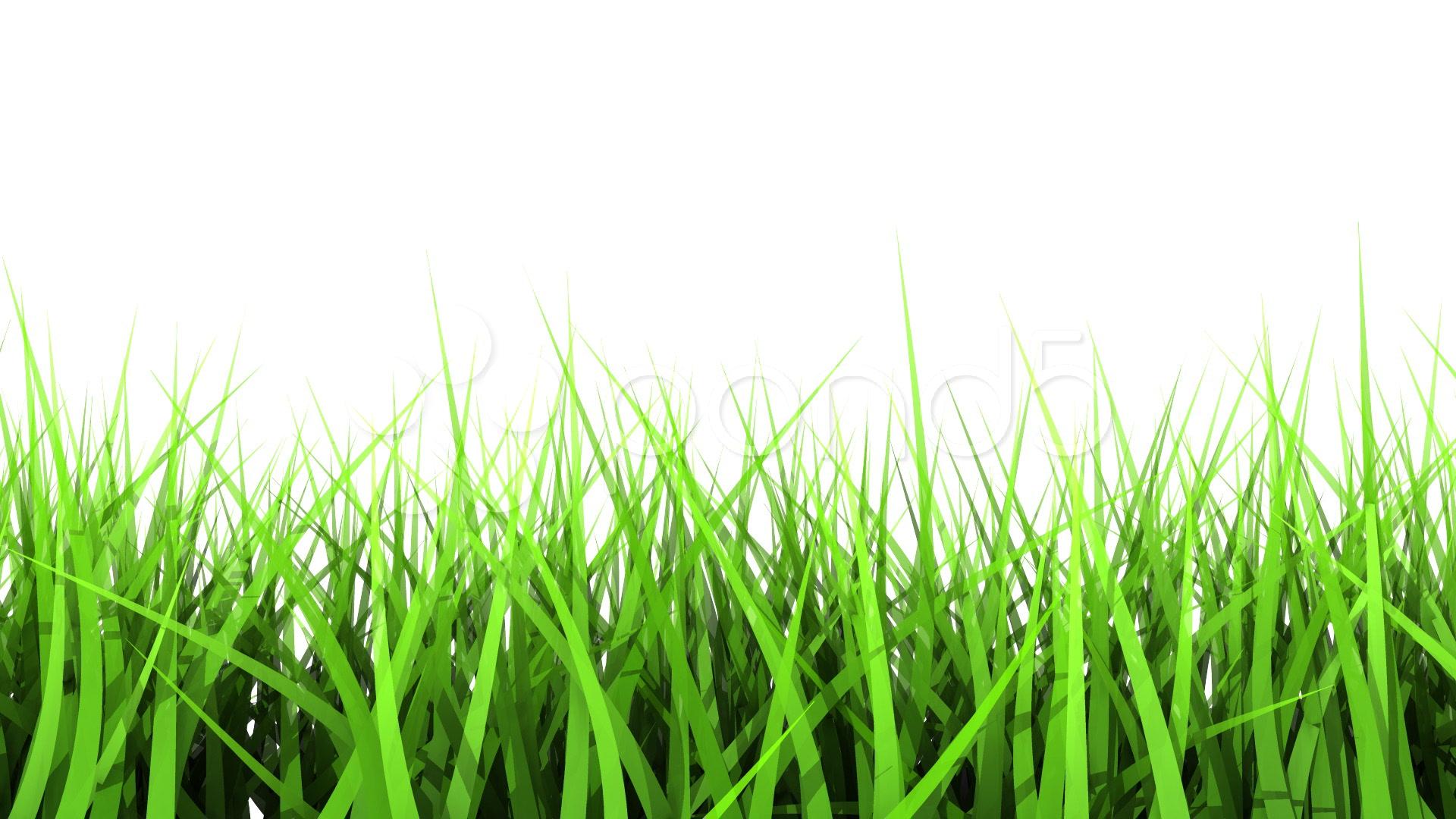 green grass on white background matte channel clip 824567