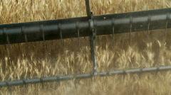 wheat harvest - stock footage