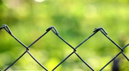 Stock Video Footage of Fencing wire mesh