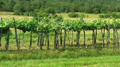 Vineyard - stock footage
