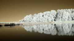 Infrared flora: reflections of trees in a water 1 Stock Footage