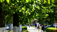 Green trees on the summer street Stock Footage