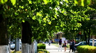 Stock Video Footage of Green trees on the summer street