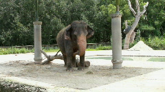 Asian Elephant One Stock Footage
