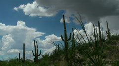 Monsoon Cactus Clouds Time Lapse Stock Footage