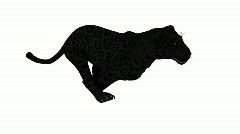 Photo-realistic Looping Panther Animation - stock footage