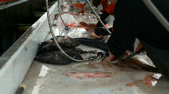 Fish cleaning table Seward P HD 8249 Stock Footage