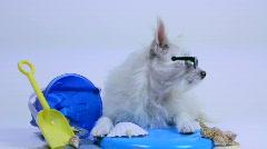 Cool Dog Sunglasses Stock Footage