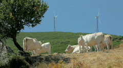 Windmills farm in power plant and cattle in Sardinia, Italy (series) Stock Footage
