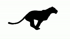 Looping Jaguar/panther/Leopard/puma Animation with silhouette Stock Footage