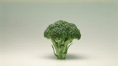 Broccoli - stock footage