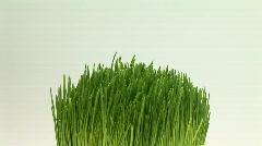Wheatgrass Stock Footage
