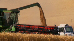 wheat harvest - stock footage