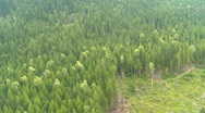 Aerial, flight over mixed forest, #1 Stock Footage