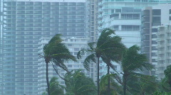 Hurricane Condo Palms Stock Footage