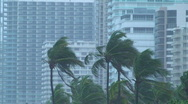 Stock Video Footage of Hurricane Condo Palms
