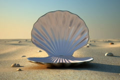 Seashell - Empty - stock footage